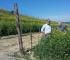 Le Strette Vini - Agricoltura sostenibile in vigna