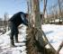 Le Strette Vini - La potatura invernale