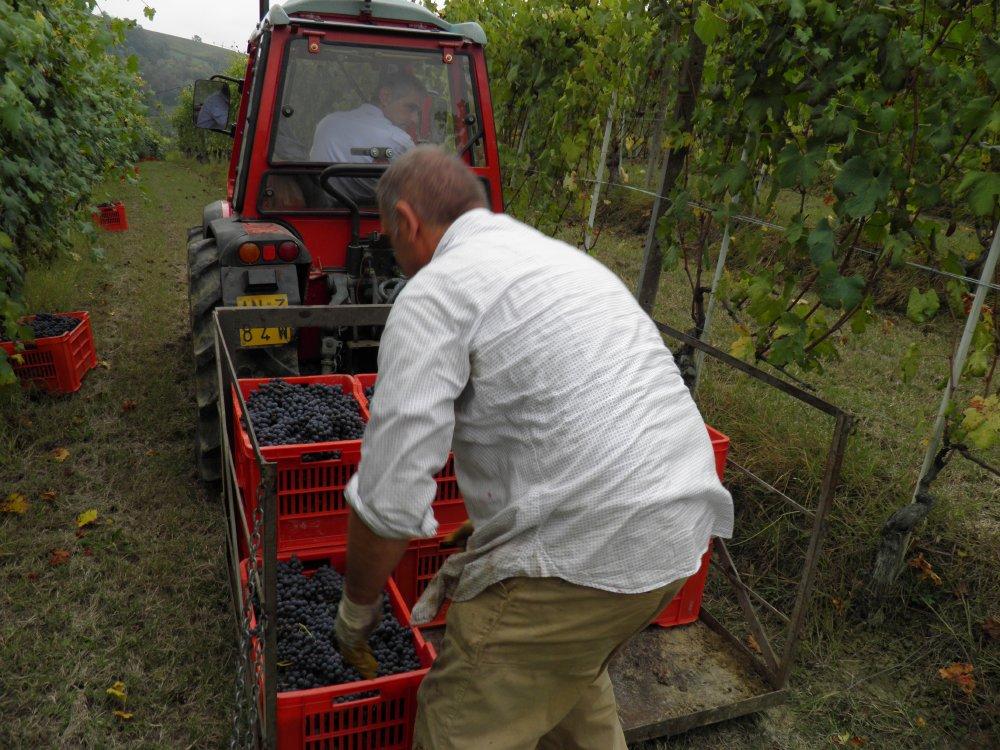 Le Strette Vini - La vendemmia