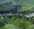 Azienda Vinicola Raineri - Le vigne