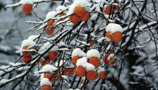 Aspettando il Natale. Storie sotto la neve