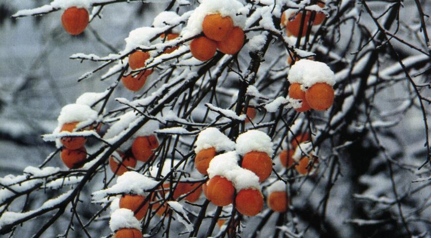 sotto la neve - eventi
