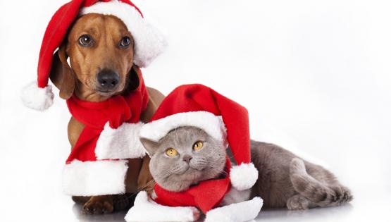 Amici di zampa: festa di Natale