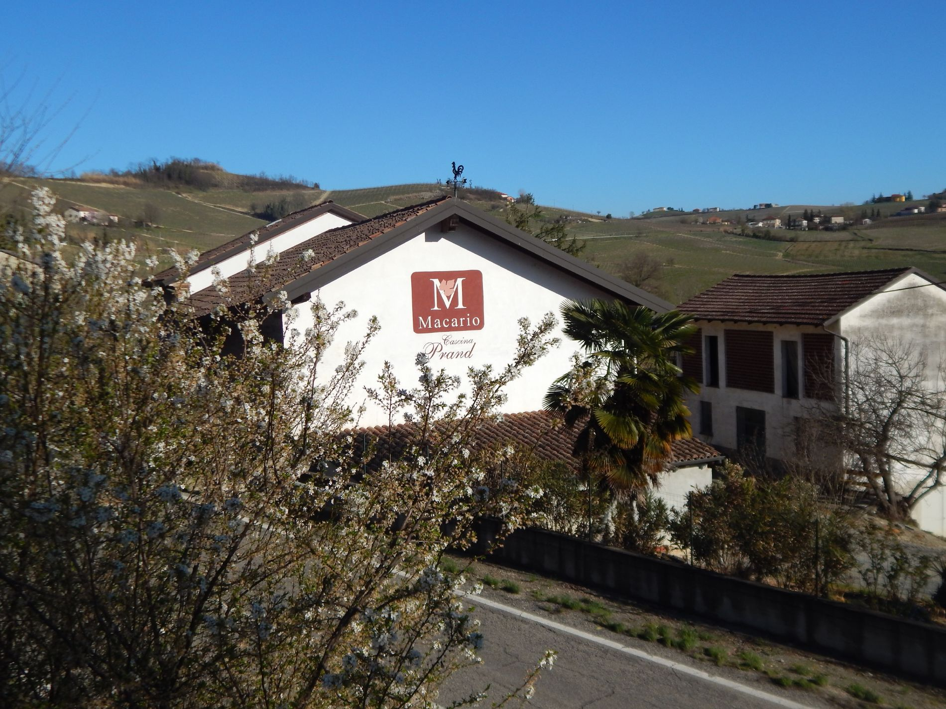 Macario Vini - Cantina