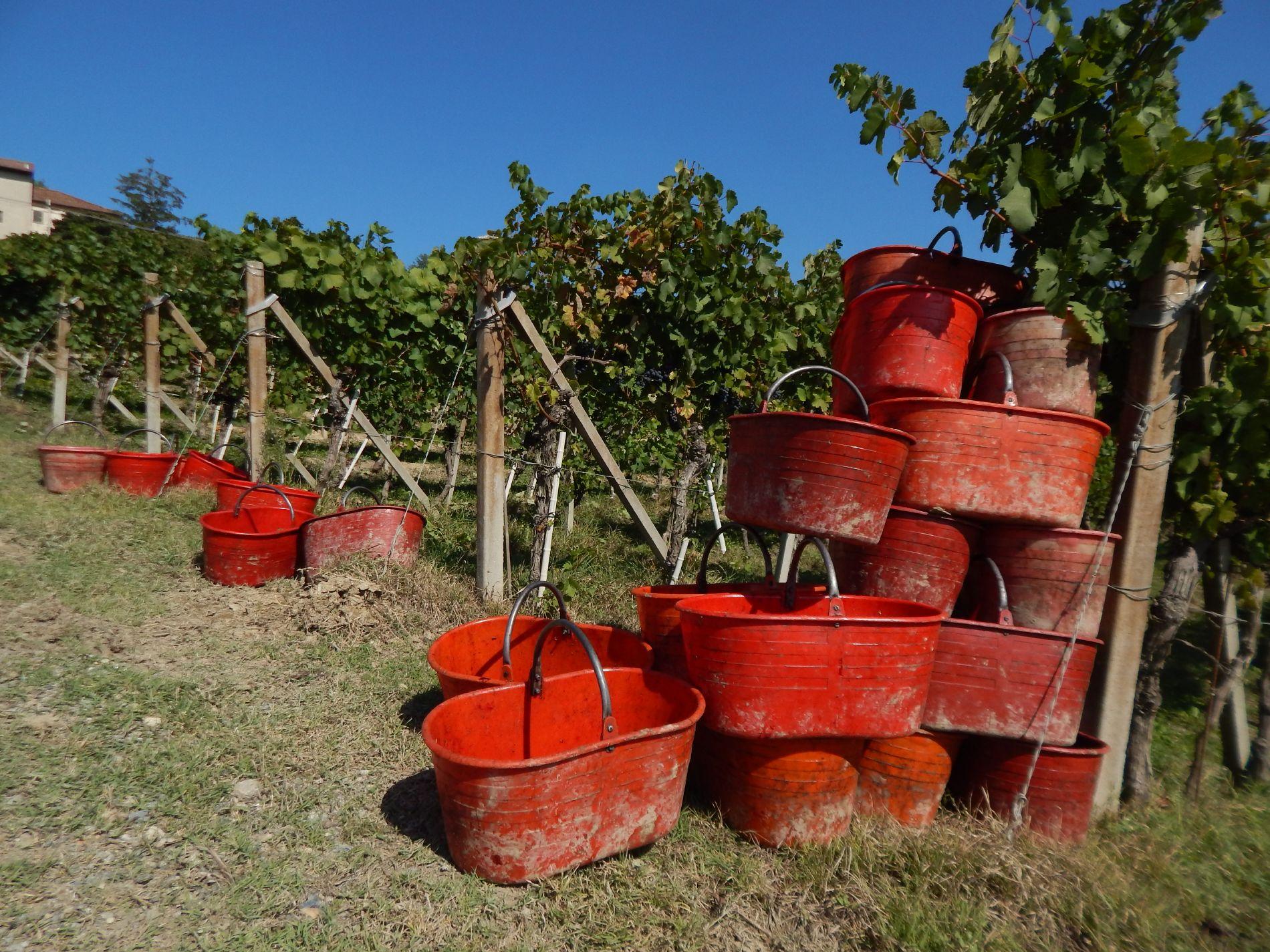 Macario Vini - attrezzature