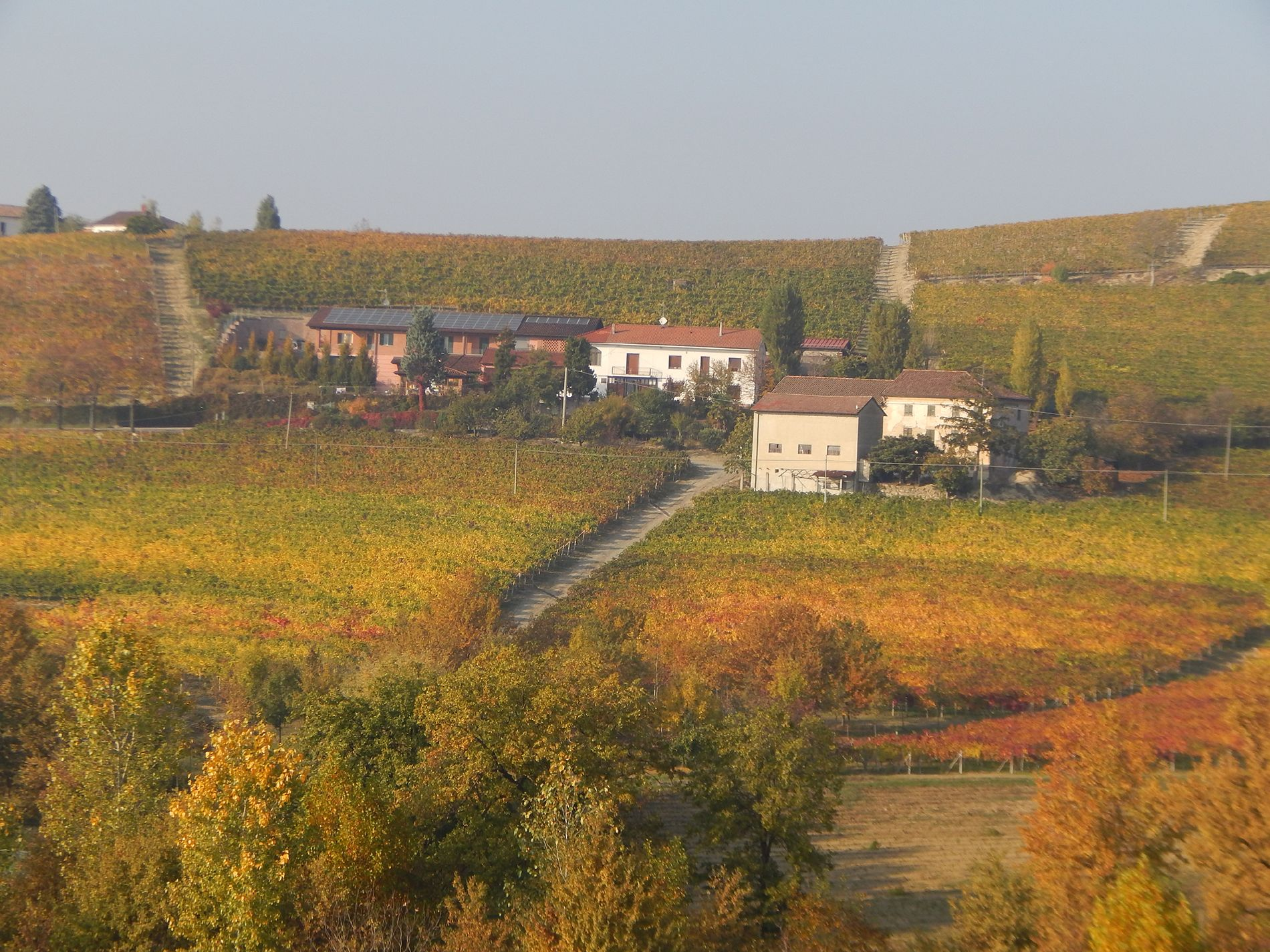 Macario Vini - panoramica