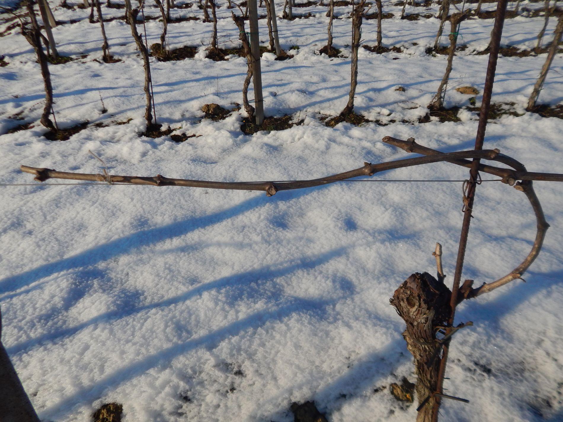 Macario Vini - scorcio invernale