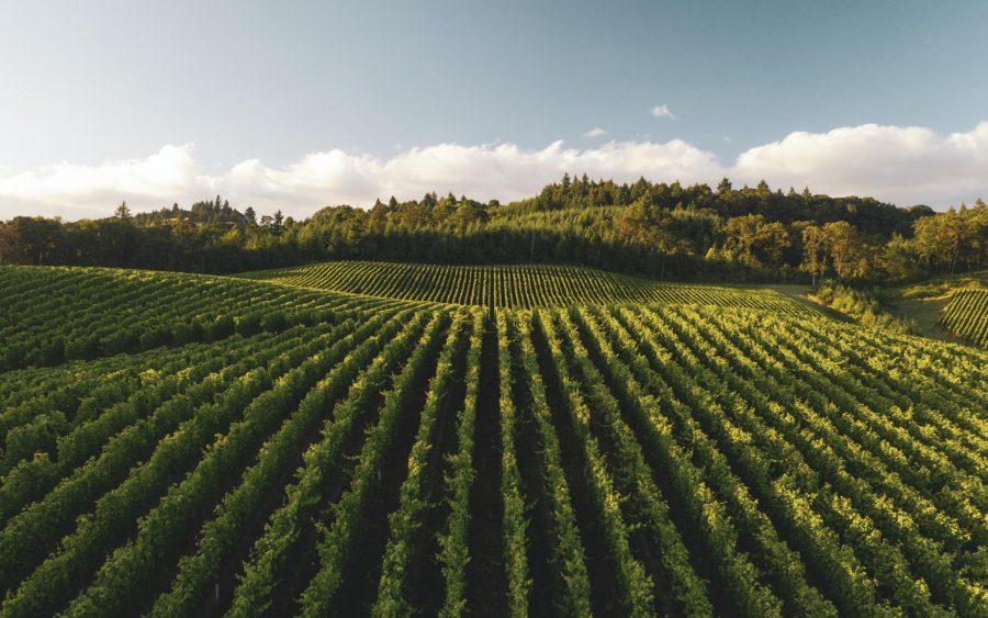 Wine Hills